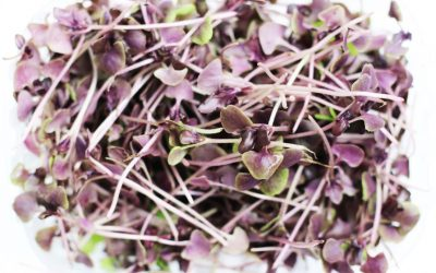 Pasta Makin Yummy dengan Balutan Pesto dari Basil ungu
