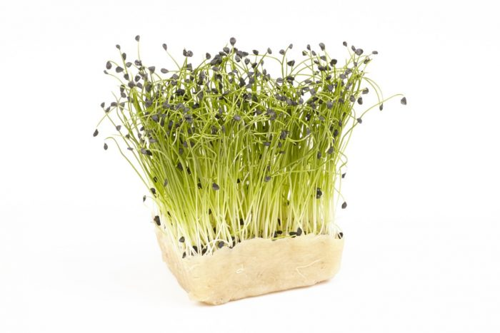 manfaat chives microgreens