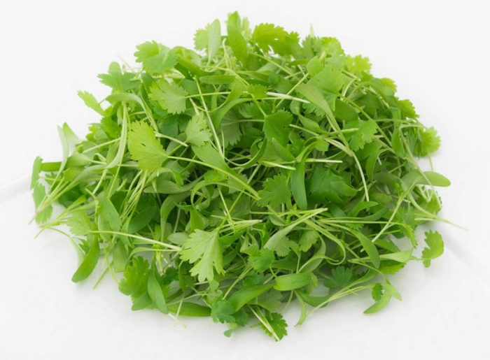 manfaat cilantro microgreens