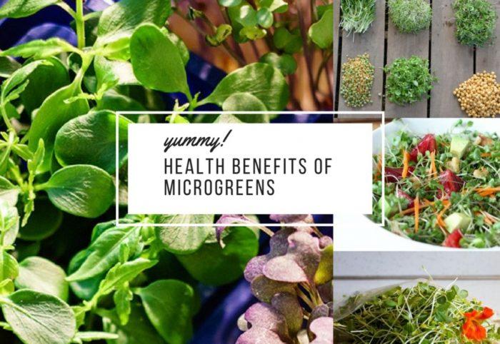manfaat microgreens untuk kesehatan