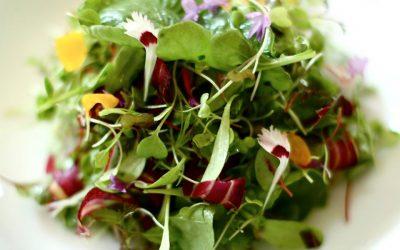 Manfaat Selada Microgreens Untuk Diet