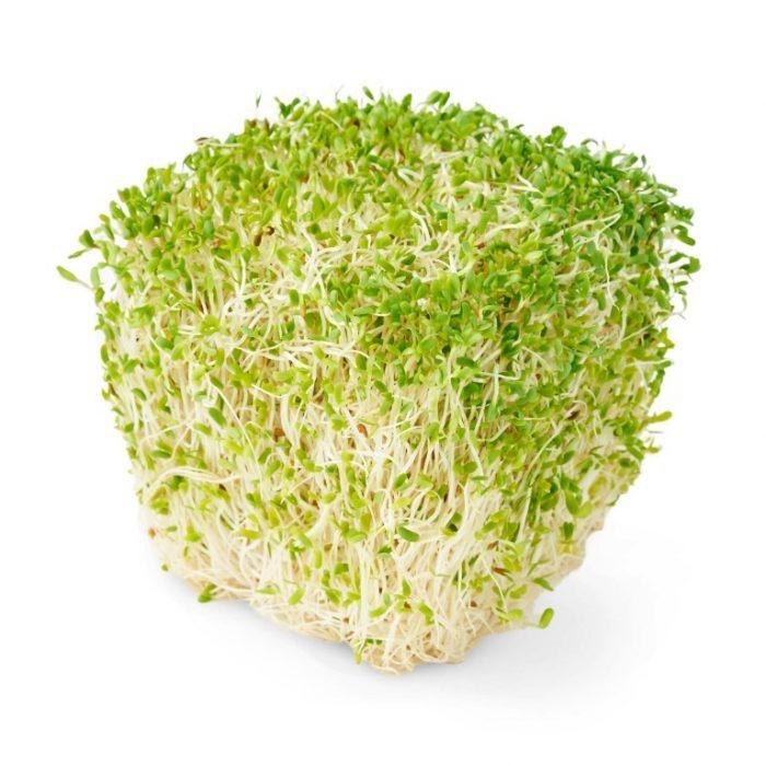 manfaat tanaman alfalfa