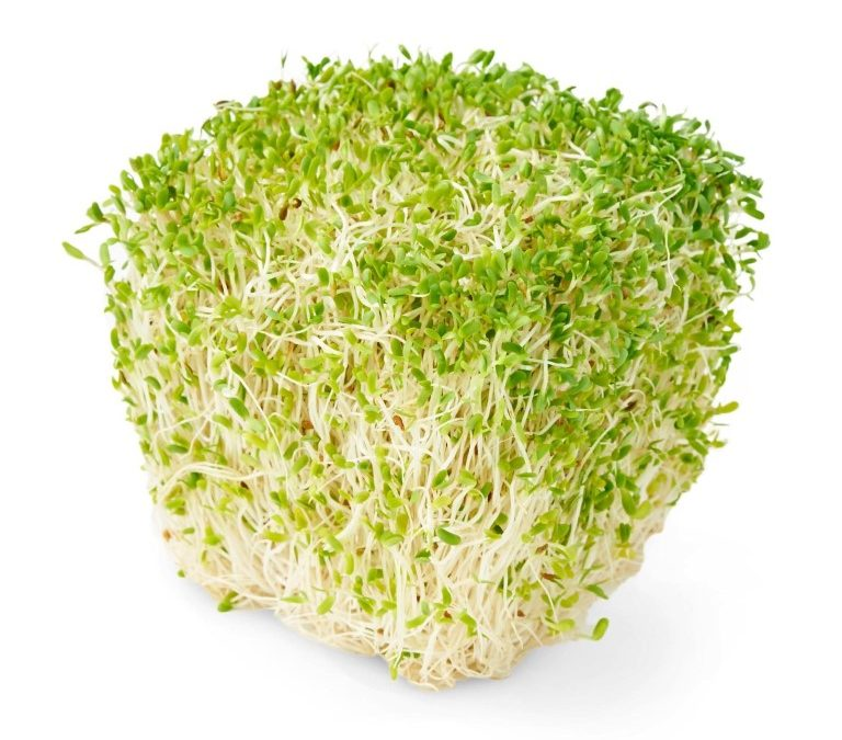 Manfaat Tanaman Alfalfa Untuk Diet