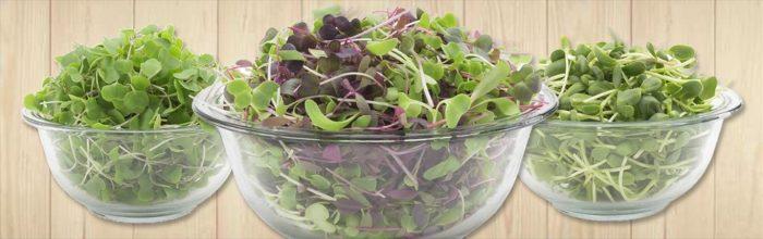 sayuran organik microgreens
