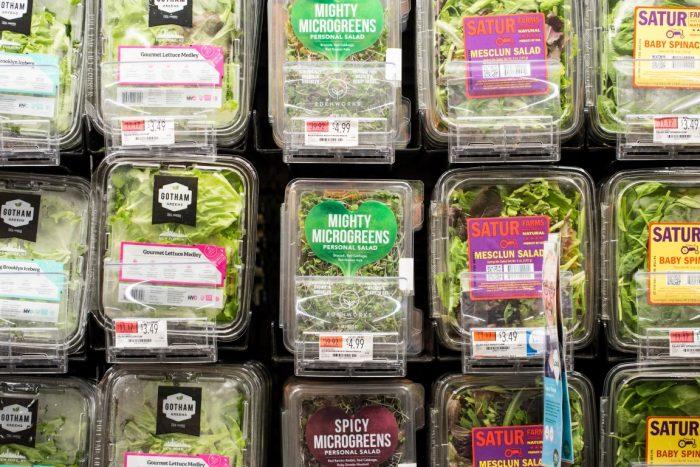 supplier fresh microgreens jakarta