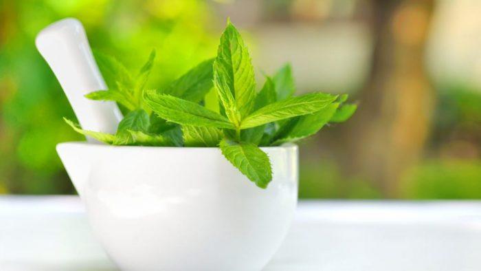 manfaat daun mint untuk diet