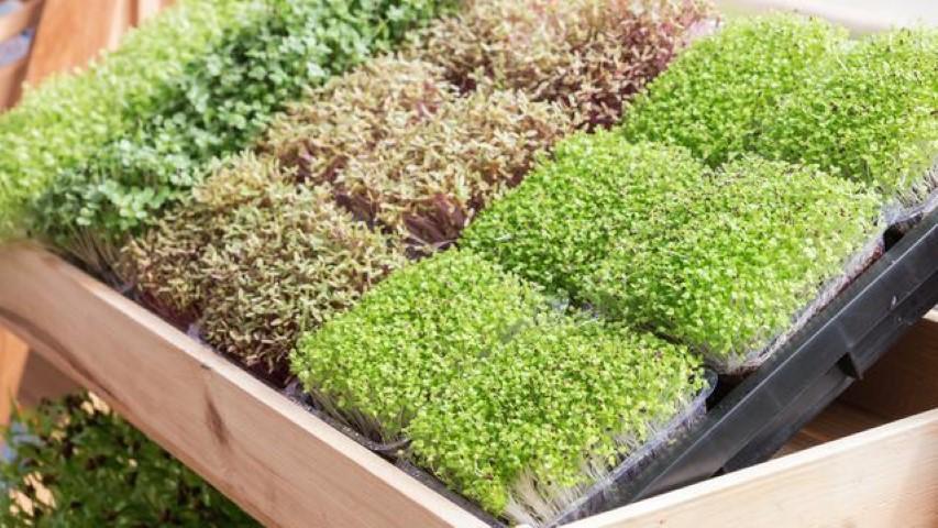 10 Jenis sayuran mini yang bisa tumbuh di rumah