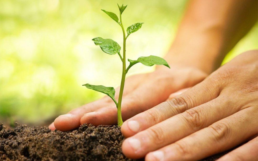 Ingin Tahu Tips Berkebun Yang Ramah Lingkungan?