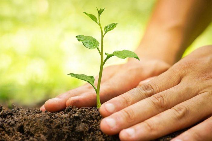 tips berkebun yang ramah lingkungan